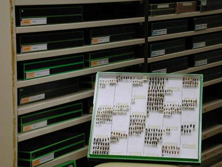 Les collections d'invertébrés témoignent de la diversité des thèmes de recherche.